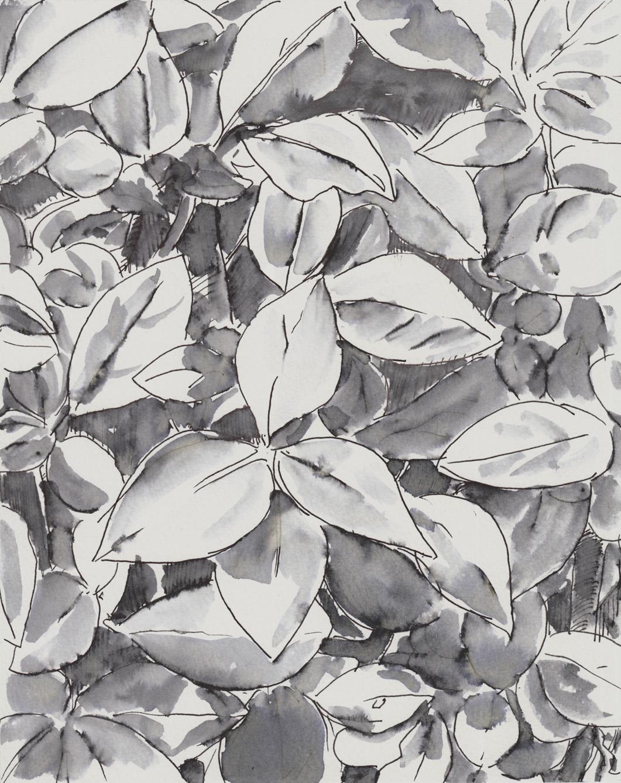 foliage 1 6-16