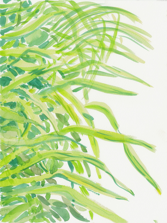 foliage 3 6-16