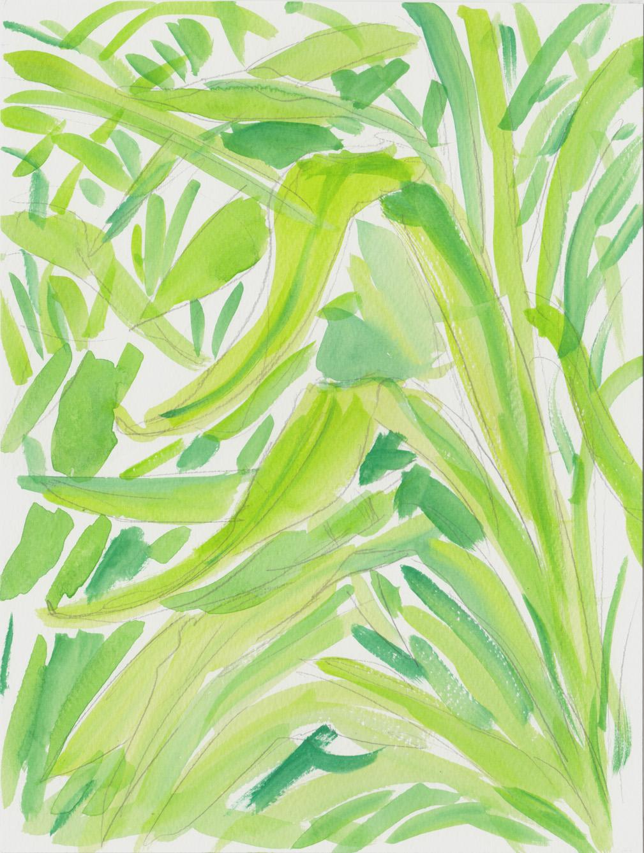 foliage 6 6-16