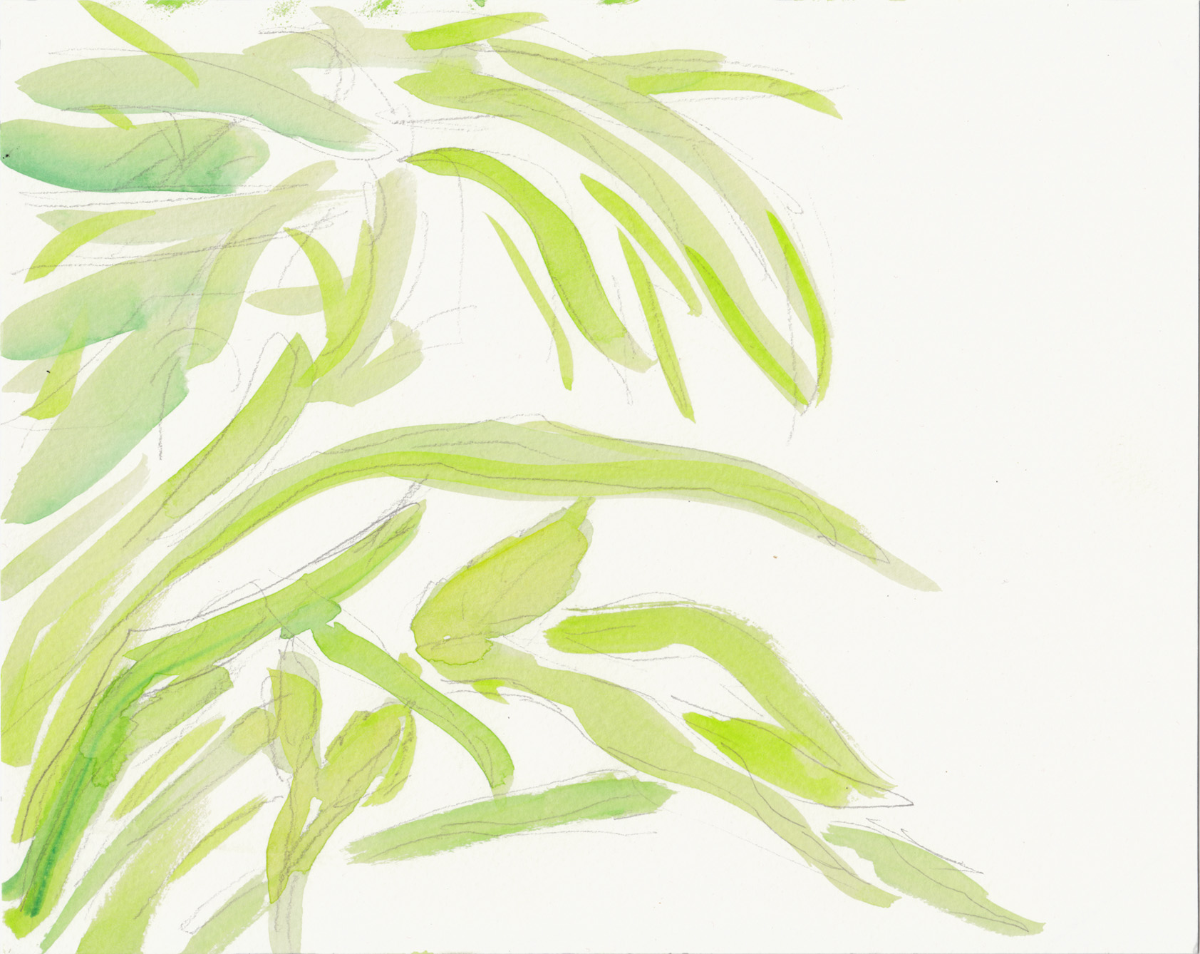 foliage 7 6-16