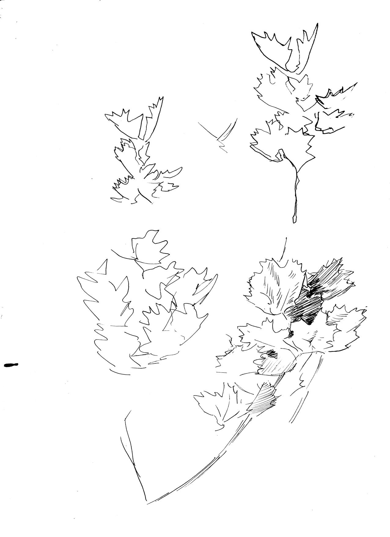 5-24 leaf studies