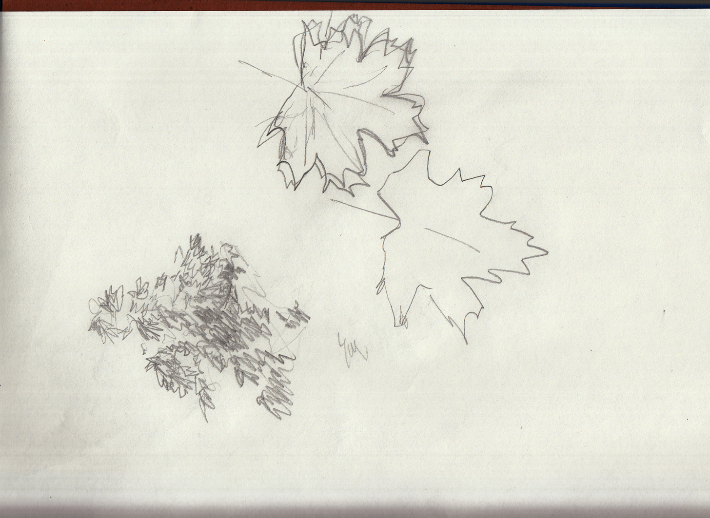 leaf sketches 2 5-20